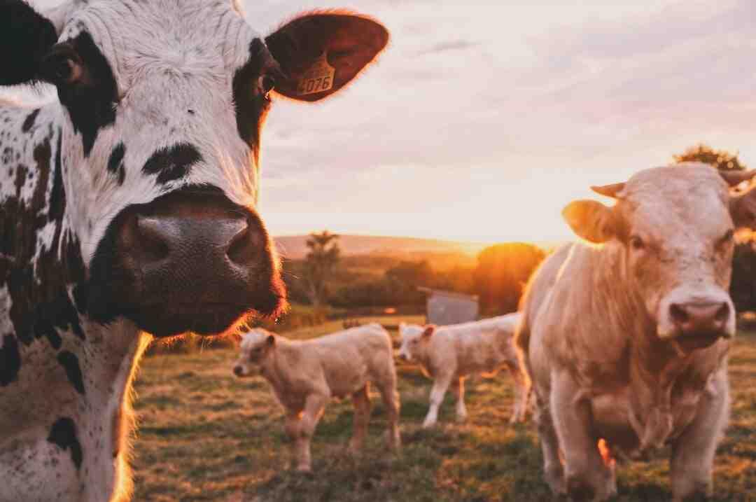 ¿Cómo certificar una granja avicola?