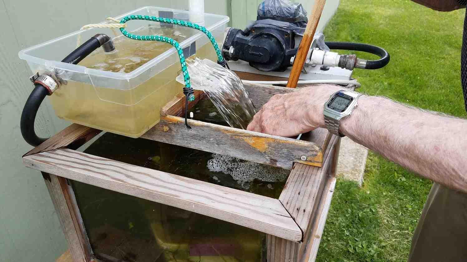 ¿Cómo mantener limpia el agua de un estanque de tortugas?