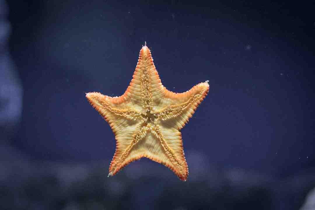 Como Conservar uma Estrela do Mar para Decoração