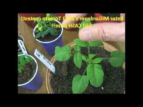 ¿Cuántos kilos puede dar una planta de pimiento?